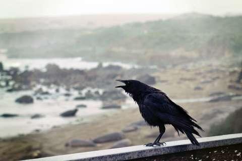 Medium animal avian bird 953150