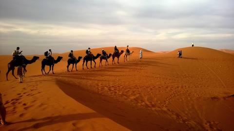Medium camels desert landscape 53537  1