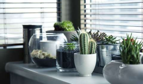 Medium cacti flora growth 37076