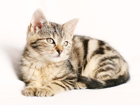 Medium cat 1192026 1920