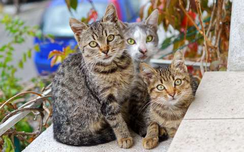 Medium adorable animals cats 749212  1