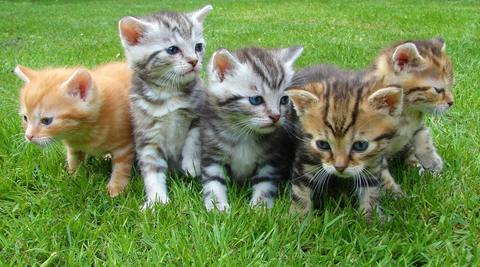 Medium kittens cat cat puppy rush 45170