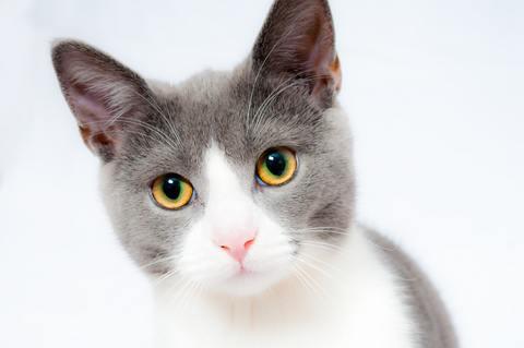 Medium cat pet animal domestic 104827