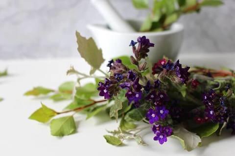 Medium medicinal flower 52e2d1454a 640