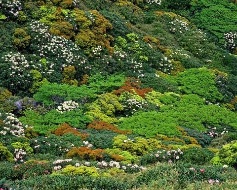Medium vegetation 2205254 640